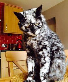 Кот с необычным окрасом шерсти