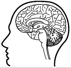 brain coloring page | school psych materials | Pinterest | Brain ...