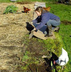 du carton pour préparer la terre Garden Huts, Garden Mulch, Garden Online, Pinterest Garden, City Farm, Permaculture Design, Farm Gardens, Growing Vegetables, Garden Projects