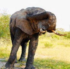 Safari, Elephant, Animals, Tour Operator, Nature Reserve, Wilderness, Tree Houses, Elephants, Travel Report