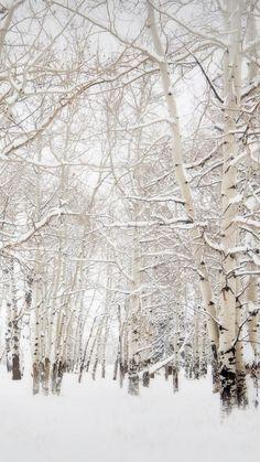 Birch Trees Winter Landscape iPhone 6 Plus HD Wallpaper