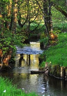 Reminds me so much of the creeks where I grew up.