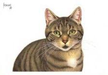 Postkaarten    Portret van Mara    Francien Westering, van    C9390    Postkaarten, Tekeningen, Dieren, Katten,