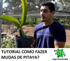 COMO FAZER MUDAS DE PITAYA? - PET Agronomia UFSJ