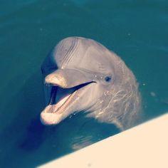 Dolphin Research Center - Kibby! (Grassy Key, Florida)