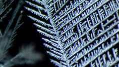 Under a Microscope, Heavy Metals Look Like Crystal Kingdoms   The Creators Project