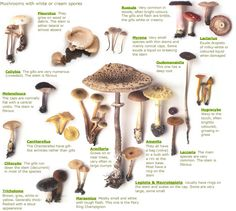 Visual key  		 	                   	 	          	 Our illustrated key shows examples of all the major mushrooms genera and other fungi, so you can try to match your find to the pictures. Click on the mushroom name to view all the mushrooms in that group
