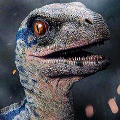 Blue Jurassic World, Jurassic World Dinosaurs, Jurassic World Fallen Kingdom, Raptor Dinosaur, Dinosaur Funny, Dinosaur Art, Blue Drawings, Animal Drawings, Jurassic World Wallpaper