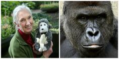 World-Famous Primate Expert Jane Goodall Weighs In on Harambe's Death - GoodHousekeeping.com