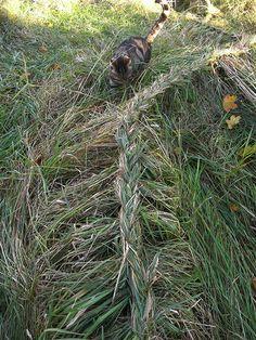 Camilla Engman: Grass braid (thought of @Susan Caron Caron Caron Cohan)