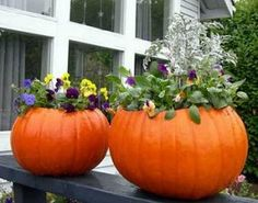Create a Pumpkin Planter for your Fall Festivities - Fayette Woman