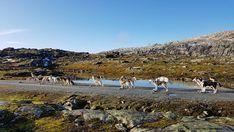 """37 likerklikk, 0 kommentarer – Running Minks Siberian Husky (@runningminks) på Instagram: """"Liten fotostopp må til når det er så vakker 🤣 hundene er nokk ikkje helt enig 🤣🐾🍁 🐾 🍁  Eine kleine…"""" Dolores Park, Running, Mountains, Nature, Travel, Instagram, Dog, Naturaleza, Viajes"""