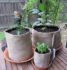 Stop worrying about where you'll store your pots at the end of the season. Anything you can grow in a pot, you can grow in a burlap girdle.