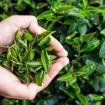 Micul-dejun care te ajută să dai jos 5 KG ÎNTR-O LUNĂ | La Taifas Hibiscus, Plants, Medicine, Plant, Planets