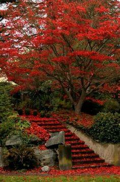 Kioto giardino
