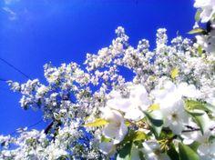 Белый и голубой
