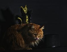 Cat and the Hat by Thomas Hufer on 500px