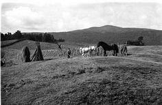 Hedmark fylke Folldal kommune høyonn,  hesjer, hester og onnekarer foto Wilse 1939