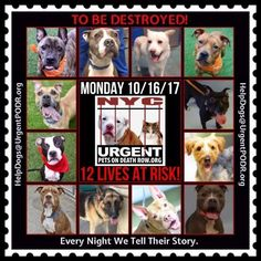 TO BE DESTROYED 10/16/17 - - Info To rescue a Death Row Dog, Please read this:http://information.urgentpodr.org/adoption-info-and-list-of-rescues/ To view the full album, please click here: http://nycdogs.urgentpodr.org/tbd-dogs-page/ - Click for info & Current Status: http://nycdogs.urgentpodr.org/to-be-destroyed-4915/