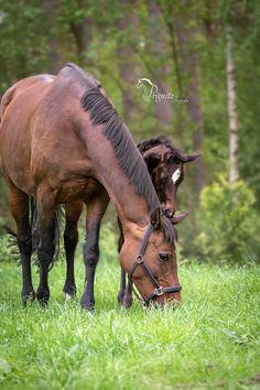 Pferde- & Tierfotografie N.Prignitz - Photos