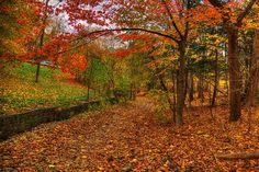 November Trails, last of Toronto's  autumn colors 2014