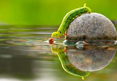 Awesome Caterpillar - Pixdaus