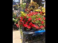 Gardening Is Alive..........My Slideshow at Walmart....Read below after ...