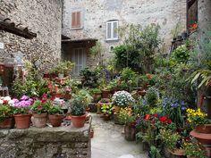 pflanzen balkon terasse dachterasse heimgruen Tipp - Gärtnern auf kleinsten Raum