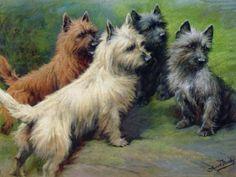 Cairn terrier print.