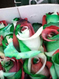 Tri-Color #Italian Roses!