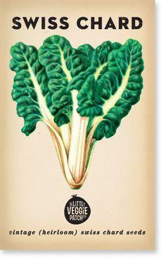 Swiss Chard 'Rainbow' Heirloom Seeds | The Little Veggie Patch Co