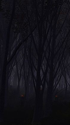 Best Dark Forest The Iphone Wallpapers Beautiful