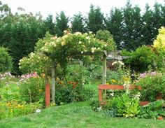 19 of the best climbing plants for trellises and pergolas! Lots of great information!