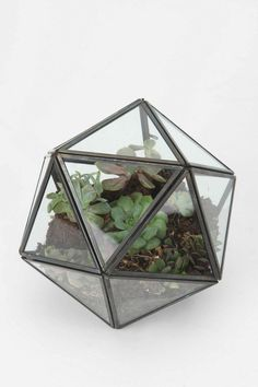 Turning Triangles Terrarium: On backorder, I'm not the only one!