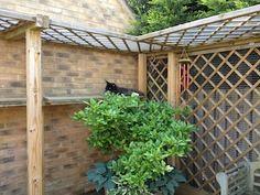 Image result for cat garden