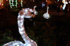 Villa Comunale di Salerno   www.livesalerno.com/it/luci-d-artista  #lucidartista #lucidartista2015 #salerno #luminarie #mercatinidinatale #christmas #christmasmarket #luminariesalerno #lucisalerno