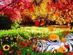 colorful-nature-with-tiger-hd-wallpaper – Sky HD Wallpaper