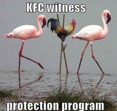 KFC Witness Protection Programe