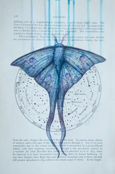 'Moon Moth', pencil and ink on 1903 Astronomy Map, 18x26cm (2013) by Louise McNaught