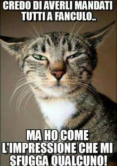 the Monday face. Animals And Pets, Funny Animals, Funny Cats, Funny Jokes, Feelings Words, Thug Life, Laughter, Dog Cat, Have Fun