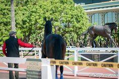 Cozmic one seeing Zenyatta's  statue