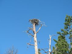 In the shadow of Glacier National Park Flathead Lake Montana, Osprey Nest, Things To Do, National Parks, Yellow, Places, Summer, Beauty, Things To Make