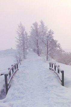 ☆ winter wonderland