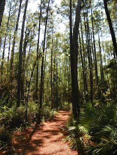 Bird Sanctuary trail, Dauphin Island, Alabama