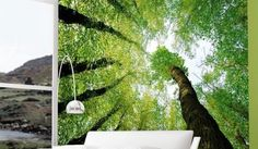 Enchanted Forest Wall Murals : Forest Dreams Wall Mural