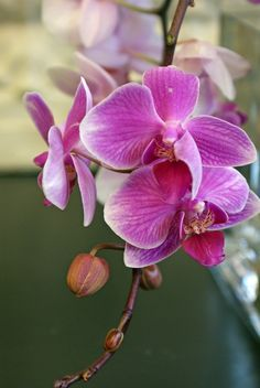 Purple Orchid- Photography by Shannon Wagner  www.artisticcreationsbyswagner.com
