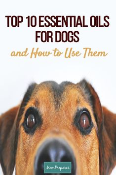 Are essential oils for dogs safe? This article dispels the myths of using oils on your dogs, cats, and other pets safely. via @momprepares