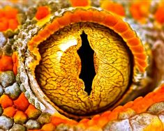 The Eye of a Snake Photo Pin