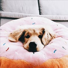 Doughnut Ready 2 Do cute Cute Puppies, Cute Dogs, Dogs And Puppies, Doggies, Cute Baby Animals, Animals And Pets, Cute Creatures, Mans Best Friend, Dog Life