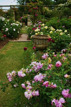 David Austin Roses Oh how I want a rose garden! Planter Des Roses, Beautiful Roses, Beautiful Gardens, Beautiful Life, David Austin Rosen, My Secret Garden, Dream Garden, Garden Inspiration, Garden Plants